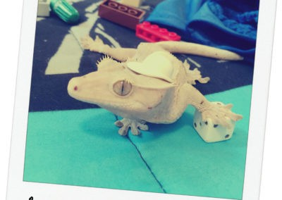 Snickers The Gecko